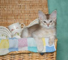Free Kitten In Picnic Basket Royalty Free Stock Image - 8913256