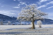 Free Winter Tree Royalty Free Stock Photo - 8913305