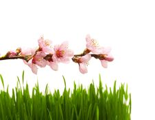 Free Grass And Flowers Royalty Free Stock Photography - 8915037