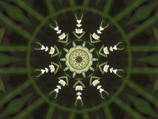 Free Flower Kaleidoscope Royalty Free Stock Photography - 8916827