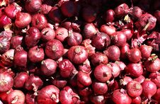 Free Red Onions Royalty Free Stock Image - 8918636