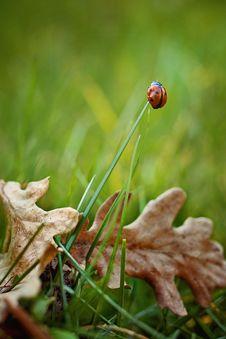Free Ladybug On Grass Stem Stock Images - 89128694