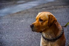 Free Dog On Street Royalty Free Stock Photography - 89195557