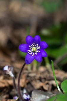 Free Purple Petaled Flower In Selective Focus Photography Royalty Free Stock Photos - 89196198