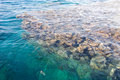 Free Corals In Water Royalty Free Stock Photos - 8924428