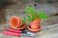 Free Parsley Stock Photos - 8920033