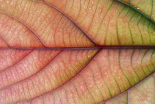 Colored Leaf Royalty Free Stock Image