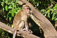 Monkey Sitting On The Tree, Stock Image
