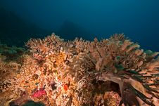 Free Softcoral Stock Photography - 8920742