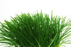 Free Decoration Grass Royalty Free Stock Photography - 8921007