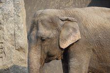 Free Elephant Stock Photography - 8922742
