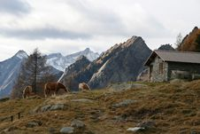 Mountain Chalet On Alps Stock Photography