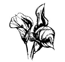 Free Tulip Royalty Free Stock Image - 8925286