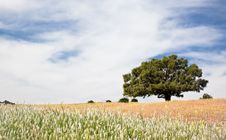 Free Lonely Tree At The Top Of A Hill Stock Photo - 8925640