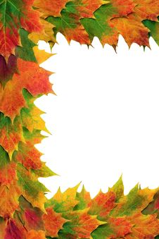 Free Maple Leaf Border Royalty Free Stock Images - 8925809