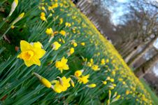 Free Spring Time Stock Photography - 8926242