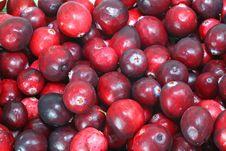 Free Wild Cranberries Stock Image - 8926721