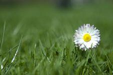 Free Flower Stock Photo - 8926770