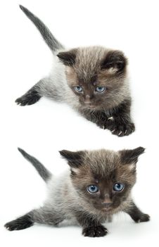 Free The Two Kittens Stock Images - 8927404