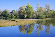 Free American River Pond With Reflection 3 Stock Photo - 8928970