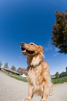 Free Dog Against A Blue Sky Stock Photography - 8929552