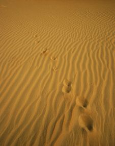 Traces On Sandy Dune. Royalty Free Stock Photography