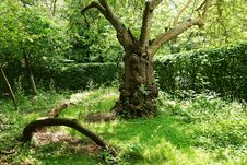 Free PUBLIC DOMAIN DEDICATION - Pixabay - Digionbew 11. 04-07-16 Gnarled Tree In Frankendael Garden LOW RES DSC04324 Stock Photography - 89248542