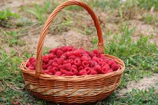 Free Basket Of Raspberries Royalty Free Stock Photos - 89250448