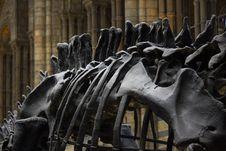 Free Animal Skeleton Royalty Free Stock Photo - 89250585