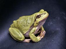 Free Green Frog Stock Image - 89252271
