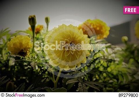Free YELLOW FLOWERS Stock Photo - 89279800