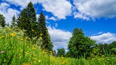 Free Russia. Pavlovsk Park In Early June 2016 . A Natural Landscape. Stock Photo - 89284210