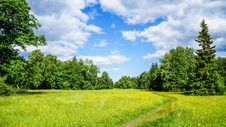 Free Russia. Pavlovsk Park In Early June 2016 . A Natural Landscape. Royalty Free Stock Photography - 89284227