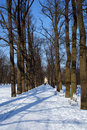 Free Winter Path In Tzarskoe Selo Royalty Free Stock Photos - 8933938