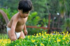 Little Boy Picking Flowers Stock Images