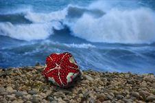 Free Starfish Stock Image - 8931701