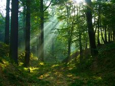 Free Morning In A Greenwood Royalty Free Stock Images - 8932149