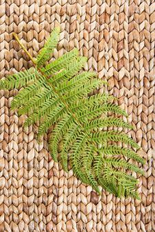 Free Fern Leaf On A Grass Stock Photography - 8932352