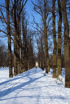 Free Winter Path In Tzarskoe Selo Royalty Free Stock Photos - 8933938