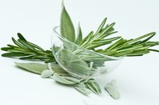 Free Herbs - Rosemary And Sage Stock Image - 8934901