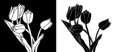 Free Black And White Tulips Royalty Free Stock Photography - 8935427