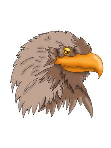 Free Sea Eagle Head Stock Photos - 8938733