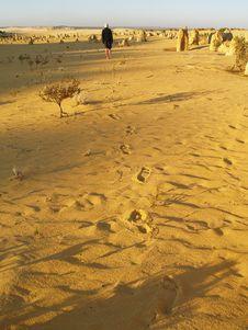 Free Man Walking To Pinnacles Desert Stock Photography - 8939492
