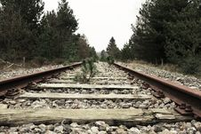Free Green Leaf Plant Sprout On Brown Metal Train Track Stock Photo - 89304650