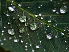 Free Raindrops On A Green Leaf Stock Photos - 89305063