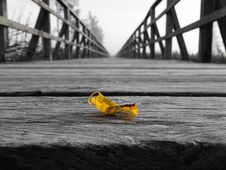 Free Leaf On A Wooden Bridge Royalty Free Stock Image - 89305176