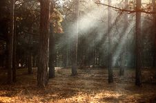 Free Sunbeams Breaking Through Forest Trees Stock Image - 89306091