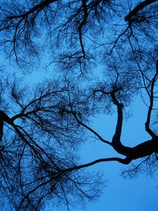 Free Bare Branches Against Blue Skies Royalty Free Stock Photos - 89306478