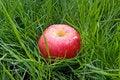Free Apple Stock Photos - 8941623