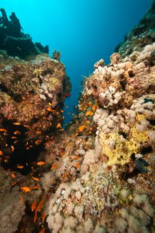 Free Coral And Fish Around Sha Ab Mahmud Stock Image - 8940611